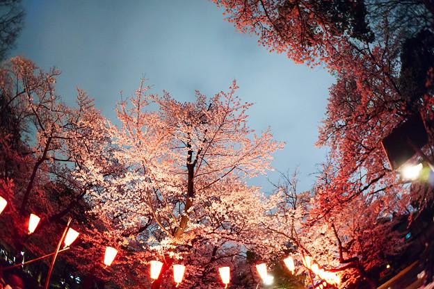 夜桜の祭り