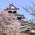 Photos: 小峰城と桜