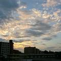 Photos: 2013.7.29 夕
