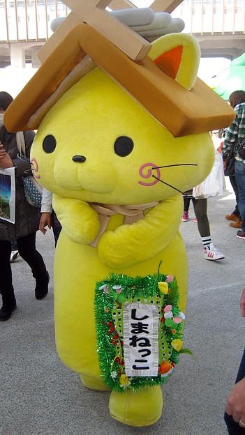 写真: しまねっこ (島根県観光連盟)