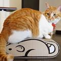 Photos: 『鼠』 獲ったどぉ~