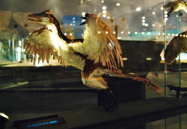 福井県立恐竜博物館.始祖鳥