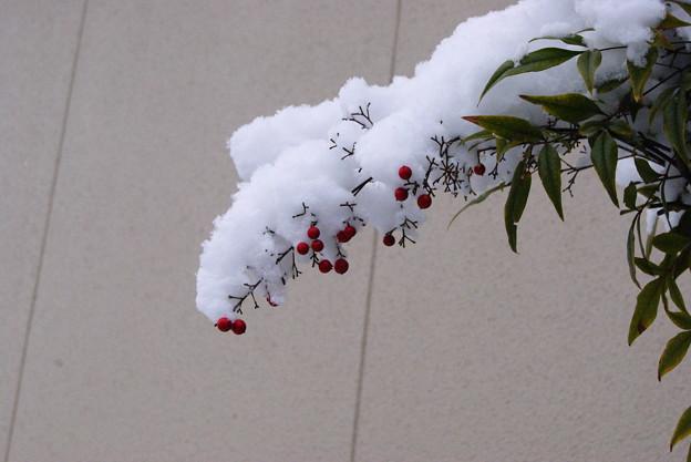 写真: 雪が降りました
