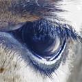 写真: キリンの目