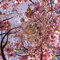 Photos: 2014年2月28日 興津・不動尊踏切付近 桜 Little Planet HDR