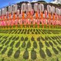 静岡護国神社 みたま祭(3) HDR