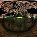 熱海桜 ライトアップ 360°パノラマ写真(1) HDR
