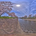 Photos: 長尾川 桜 360度パノラマ写真 HDR