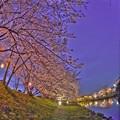 牧之原市 勝間田川の桜 (12) HDR