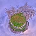 牧之原市 勝間田川の桜 Little Planet(1) HDR