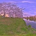 牧之原市 勝間田川の桜 360度パノラマ写真(7) HDR