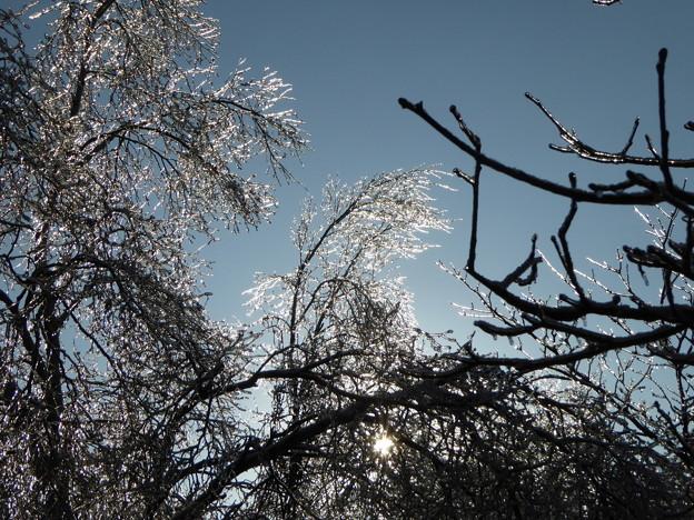 蓼科の雨氷