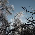 写真: 蓼科の雨氷