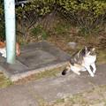 Photos: 公園の野良猫ちゃん