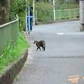 Photos: 野良猫ちゃん