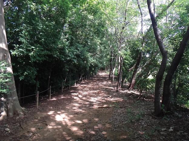 140802 栗木緑地