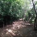 写真: 140802 栗木緑地