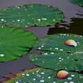 Photos: 雨と風と花びらと・・・