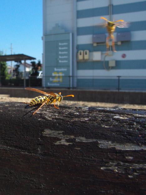 ブンブンブン 蜂が飛ぶ♪