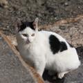 Photos: 城南島の猫 11