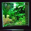 【作品】第26回日本観賞魚フェア 水槽ディスプレイコンテスト 30cm水槽部門 準優勝