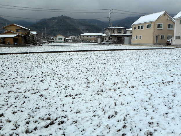 冬の散歩道2016.3-18