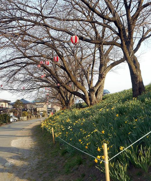 春の散歩道2016.3-2