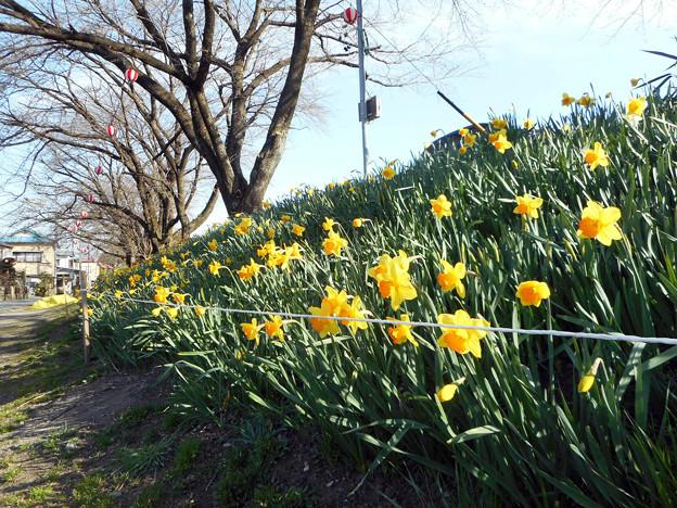 春の散歩道2016.3-10