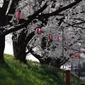 Photos: 春の散歩道2016.4-21
