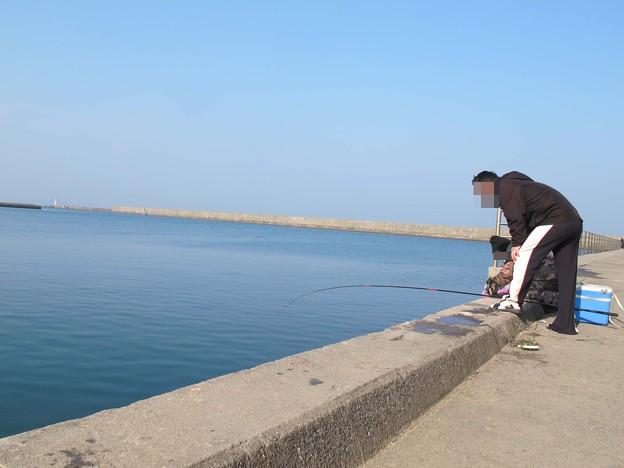 ヒイラギ稚魚の大量発生をのぞき込む釣り人たち
