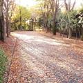 Photos: ケヤキ並木の落ち葉