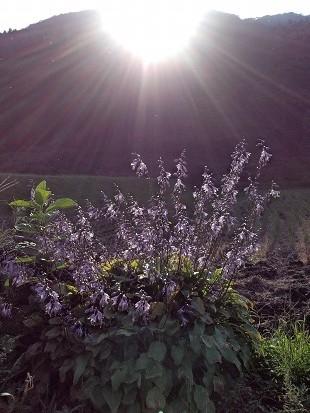 夕陽とお花