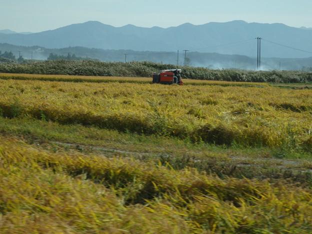 稲刈り進む田んぼ