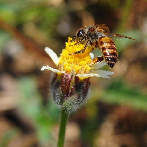 Photos: 秋天的蜂