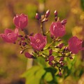 Photos: 秋天之的花