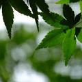 緑色の決意