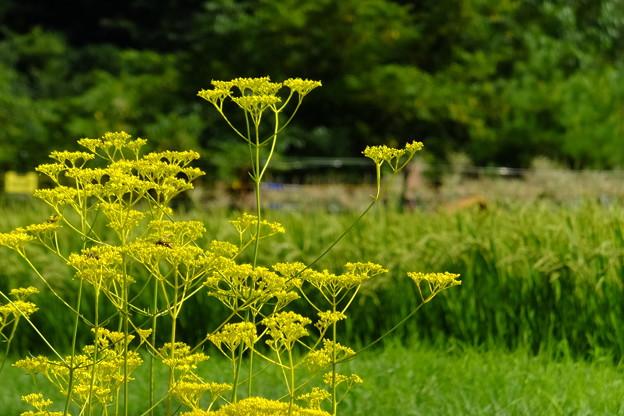 蜂、お花、稲