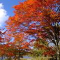 こんなに綺麗な紅葉を見れるなんて、日本国民として長野県民として生まれて本当に幸せであります♪