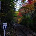 まだ森林鉄道の魂は消えてはいません    ちなみに制限速度は時速8キロメートルだそうです