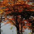 Photos: 白樺湖の美しい紅葉を世界中の人に見てもらったら嬉しいな♪