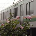 バラと電車