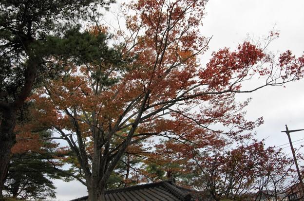 写真00404 松島・五大堂の入り口で