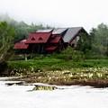 写真: 7月 栂池自然園