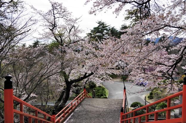 写真00634 福泉寺の桜