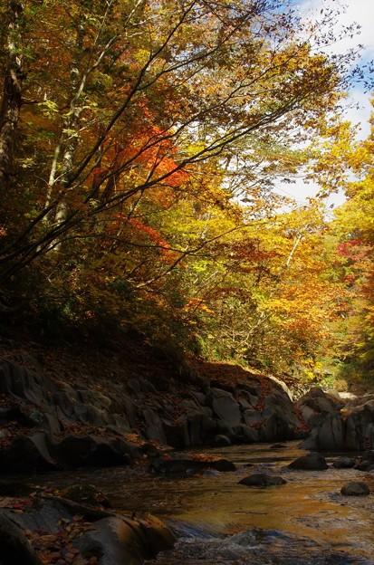 中津川渓谷 A