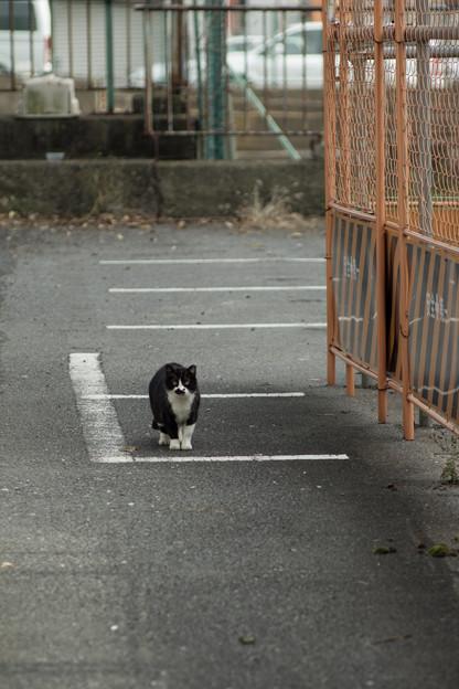 写真: 停止線