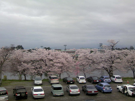 高田公園の様子