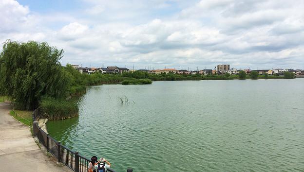 調整池のヨシ原