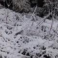 Photos: 11月27日「初冠雪」