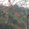Photos: 12月17日「紅葉」